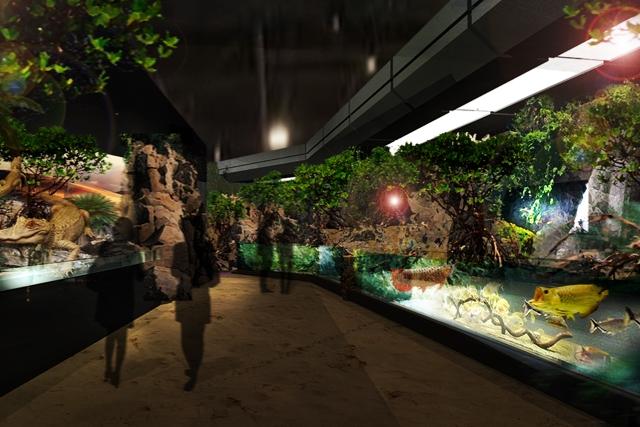 dmm水族館